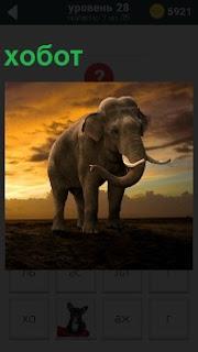 По земле в лучах заходящегося солнца идет слон с большим хоботом и бивнями