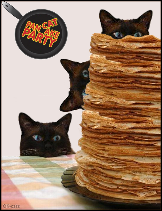 Photoshopped Cat picture • Weeeeee, It is CATturday, It's Pancake party, It's PanCAT party!