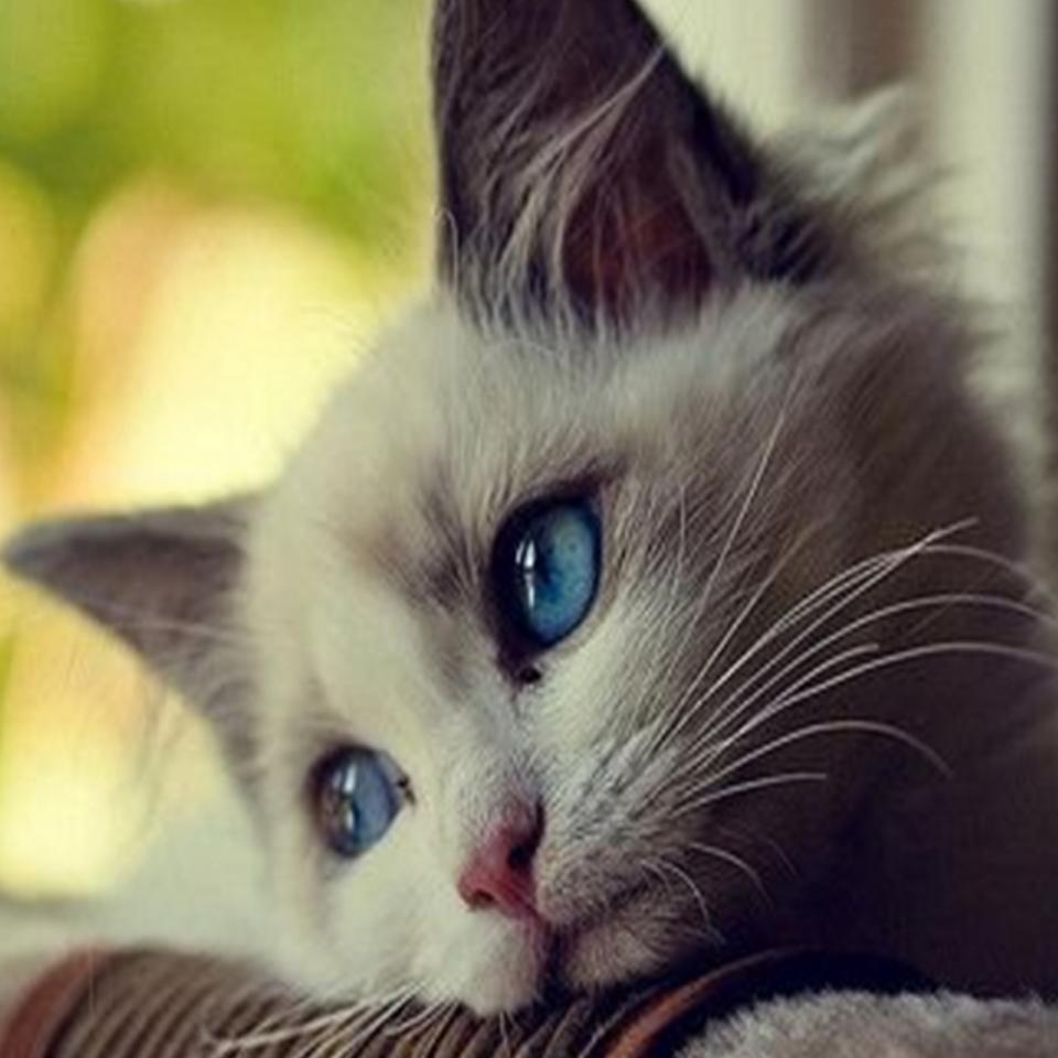 Gambar Kucing Yang Comel Papaglamz Com