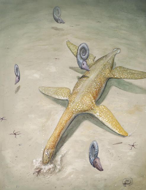 Ancestor of super predator sea reptile found in Germany
