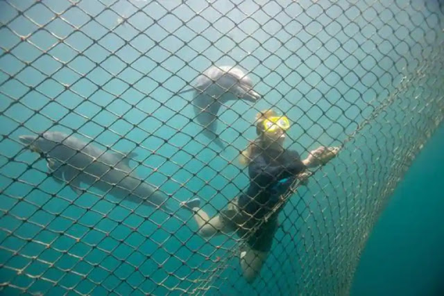 Captive dolphins to return to the wild, Bali creates first centre- Bali News