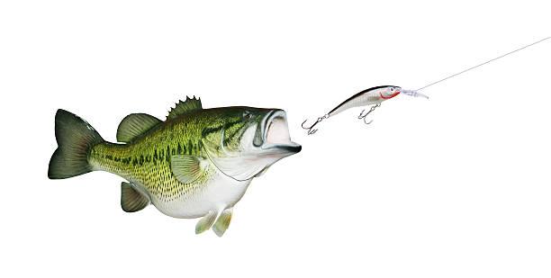 Bass Fishing Tips – Secrets To Landing Them