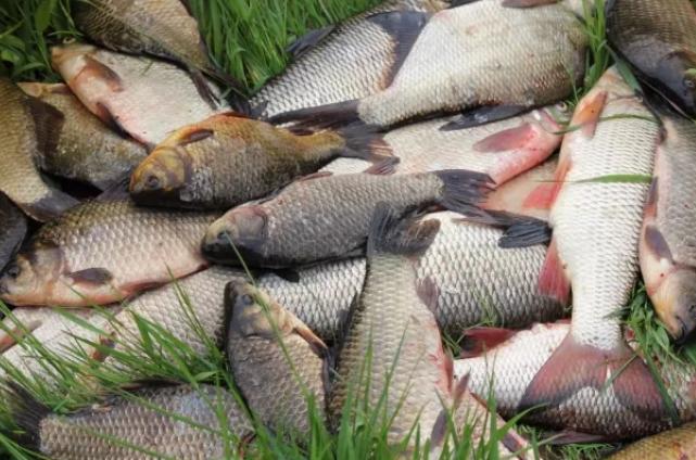 Рыбоохранных патруль Николаевщины в январе разоблачил 76 нарушений на 46 тысяч гривен убытков