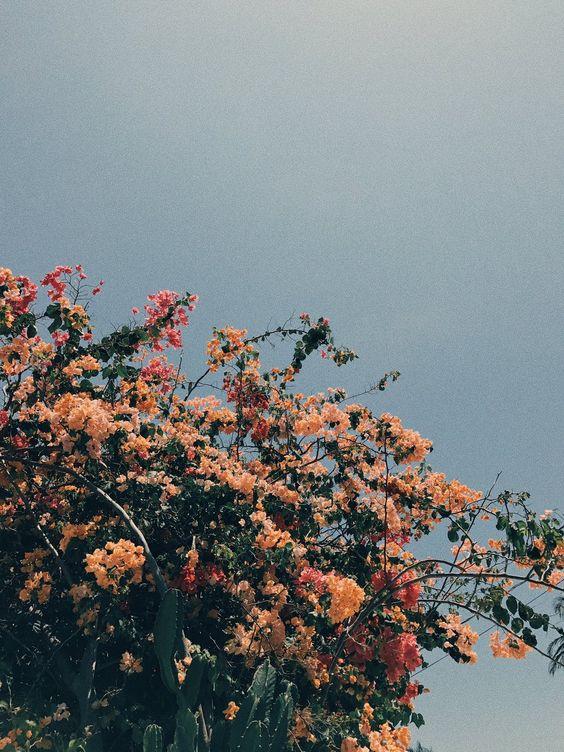 flores rosas claro