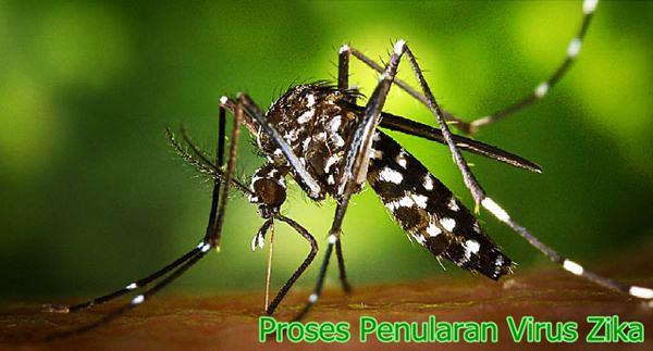 Proses Penyebaran Virus Zika
