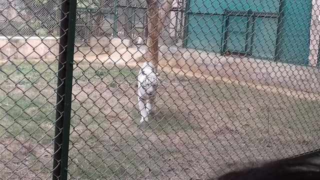 Lucknow Zoo animals photos