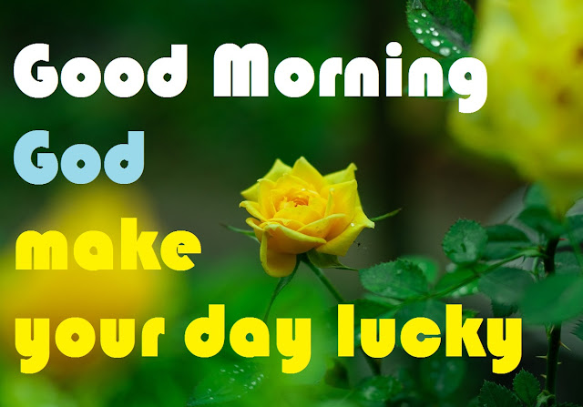 Good Morning God make your day lucky yellow rose image