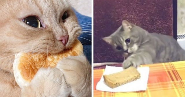 Tumblr User Has An Explanation For The Question: Why Cats Are Obsessed With Eating Bread