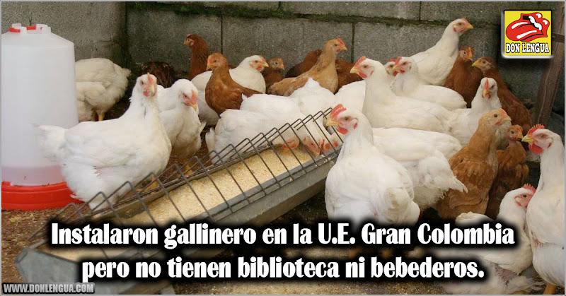 Instalaron gallinero en la U.E. Gran Colombia pero no tienen biblioteca ni bebederos.
