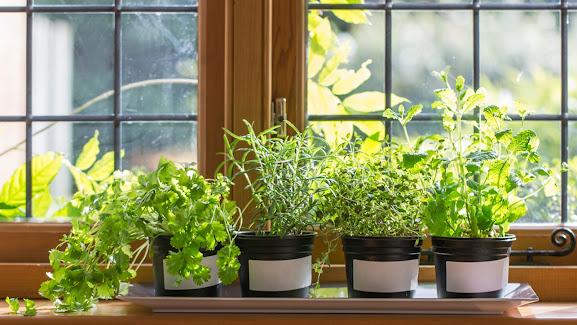Способы посадки зелени дома от специалистов агрофирмы «Подмосковное»