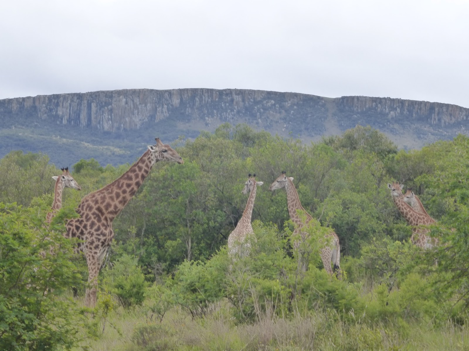 South Africa by car: Zululand (KZN) and its diversity