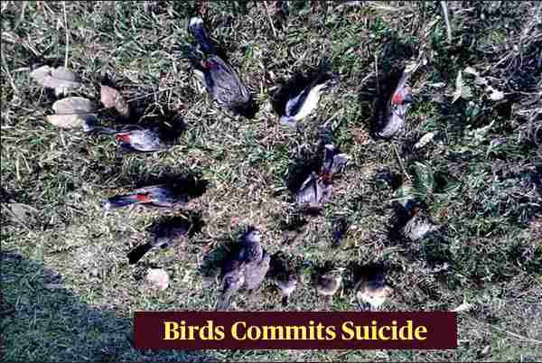 Jatinga - Place Where Birds Commits Suicide