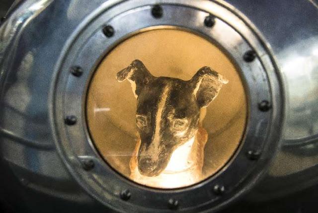 وقائع مثيرة تكشف بعد 60 عاما على ارسال السوفيات الكلبة لايكا الى الفضاء