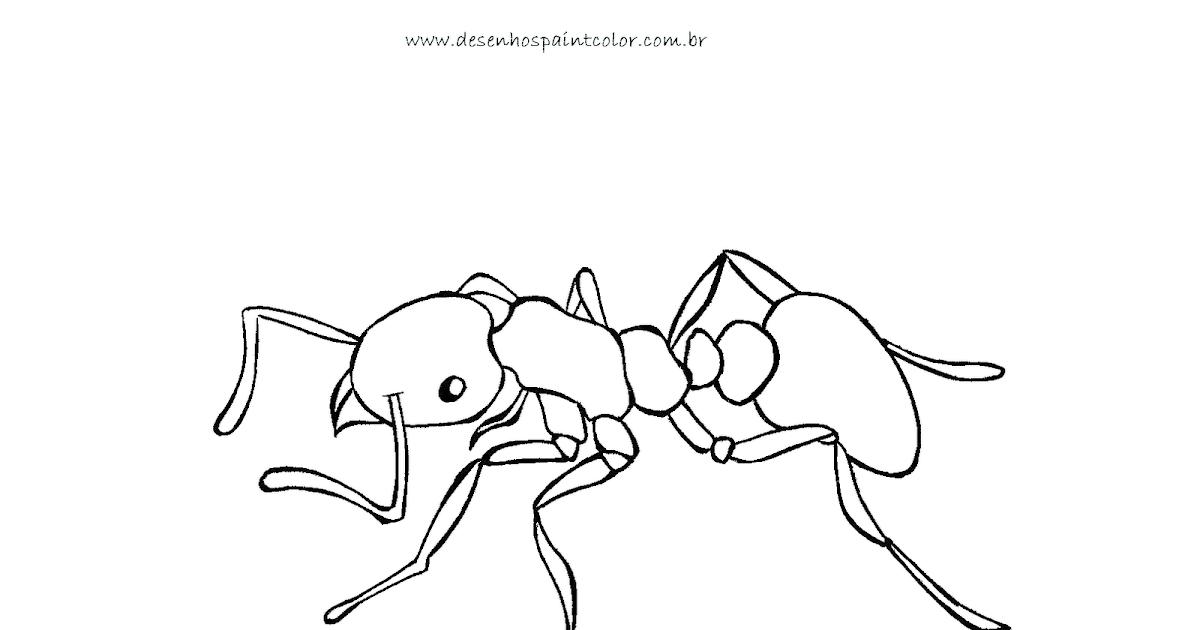 Desenho De Formiga Para Colorir - Colorir