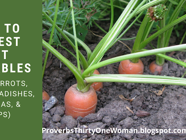 How to Know When to Harvest Root Vegetables (with Video)