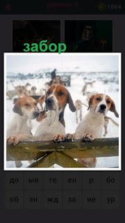 несколько собак на задних лапах стоят за забором