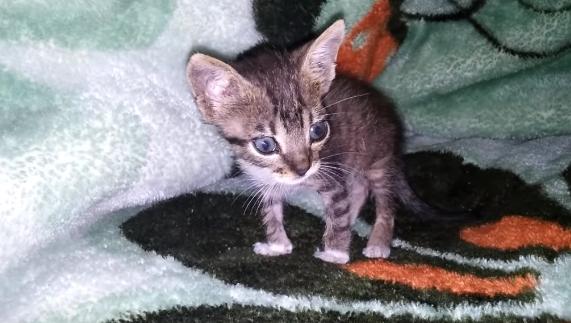 tinny kitten