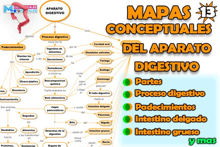 Mapas conceptuales del aparato digestivo, partes, funciones y demás órganos