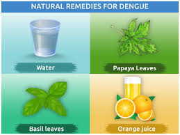 Medicinal properties of neem juice: How to make and use this home remedy to fight dengue fever