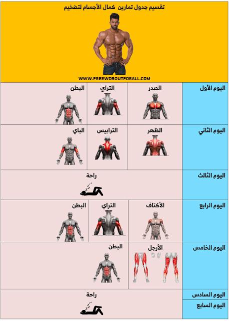جدول تمارين كمال الاجسام تضخيم
