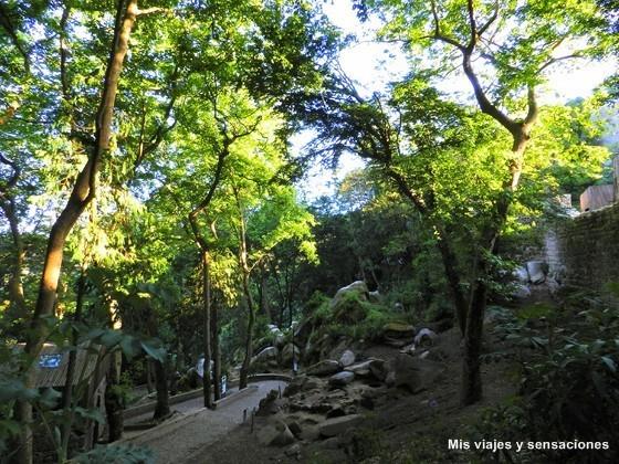 Bosque en el interior del Castelo dos Mouros, Sintra, Portugal