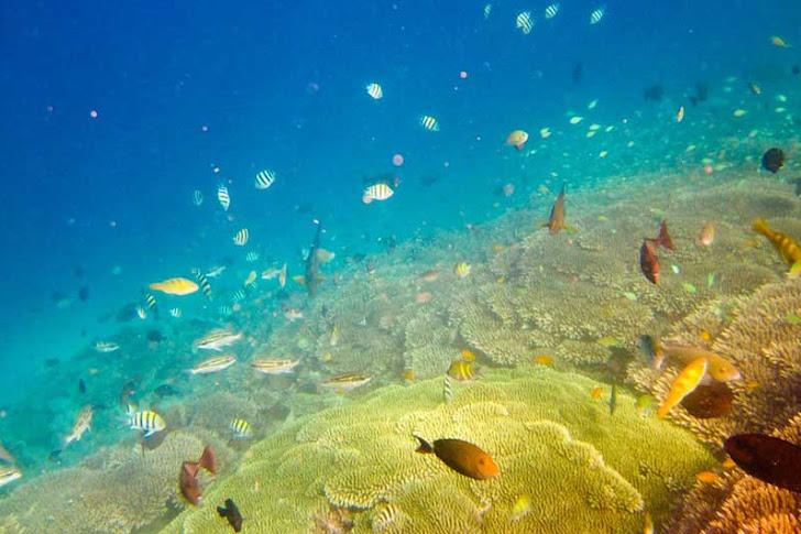 Gili Nanggu Lombok - Daya Tarik, Fasilitas, Biaya Wisata dan Lokasi