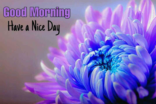Awesome very good morning image with purpule flower have a beautiful day