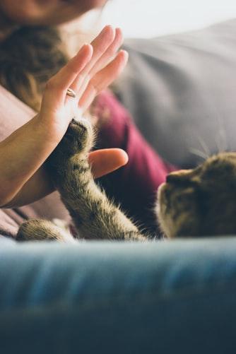 鏟屎官的福音!人工智慧貓砂盆為你愛貓健康把關(一)