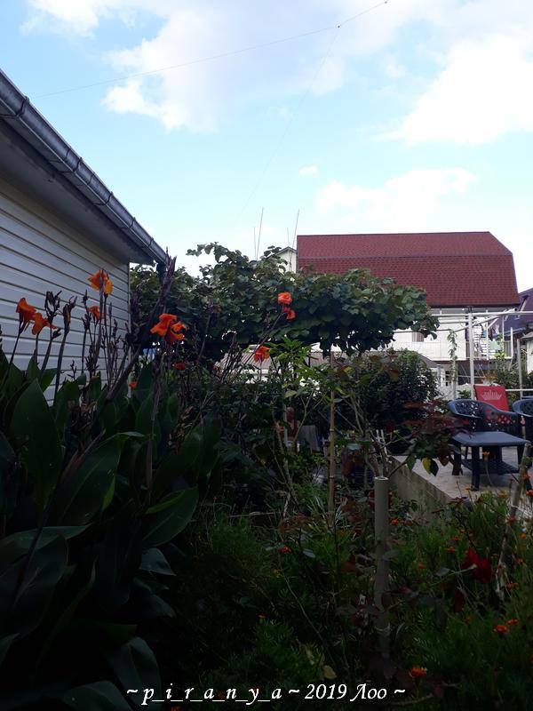 Цветы, кузнец, клубника - один отпускной день в Лоо (Сочи) - Наталия Пономарева Новодвинск p_i_r_a_n_y_a Дневник моих плаваний