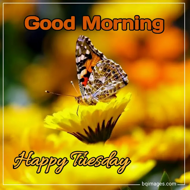 beautiful good morning tuesday images