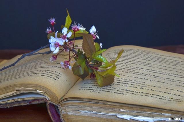 hoa sắc tím và trắng bên cuốn sách cũ