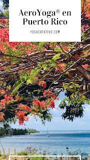 aeroyoga-puerto-rico-paseo-guavate-patillas-columpio-yoga-aereo.formacion-teacher-training-discover-se-levanta-week-end-actividades