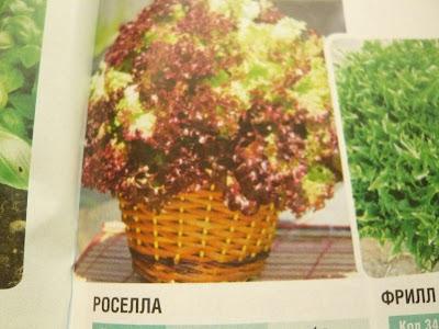 Салат для огорода