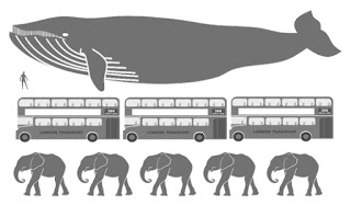 Blue whale size comparison