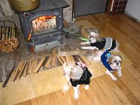 三匹で温まる