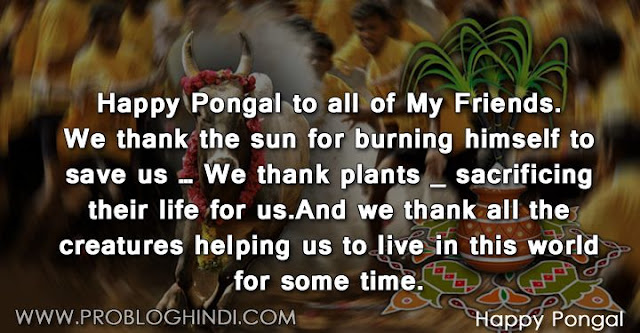 pongal wishes, pongal quotes, pongal status, pongal shayari, pongal sms, pongal messages, pongal images, thai pongal wishes, mattu pongal wishes,whatsapp status