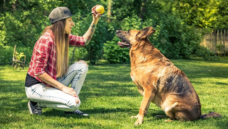 Young lady teach her dog obedience in home garden