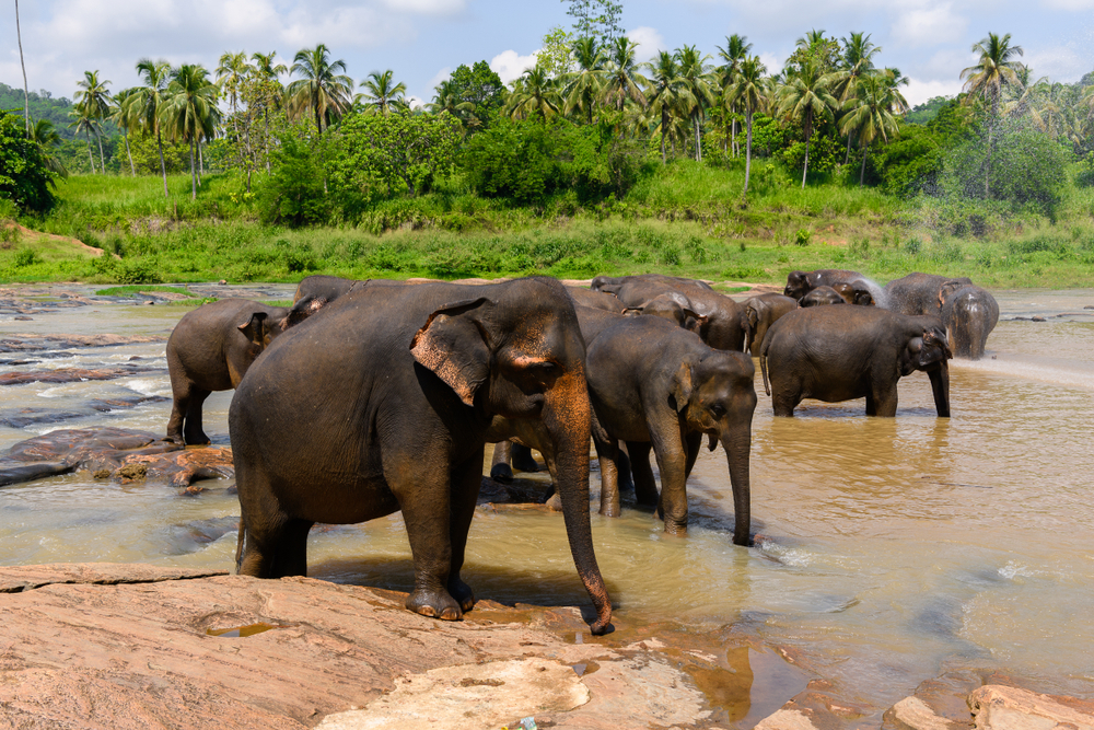 Wilpattu is Sri Lanka's largest and oldest nationwide park, which has been surrounded by the shadow of a brutal conflict 17 years in the past. On Could 14,