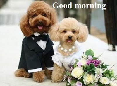 Dog and puppy good morning images for lover - couples