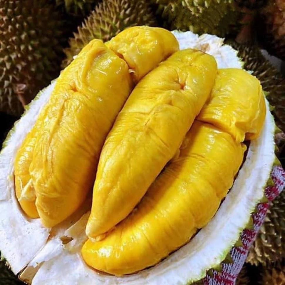 Bibit Tanaman Buah Durian Bawor Unggul varietas dijamin asli dan bergaransi Maluku Utara
