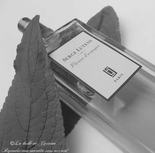 Lutens, Fleurs d'oranger, Serge Lutens, parfum,