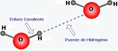 Diagrama que muestra los puentes de hidrógeno presentes en las moléculas de agua - Propiedades generales, aplicación y ejemplos de los puentes de hidrógeno - sdce.es - sitio de consulta escolar