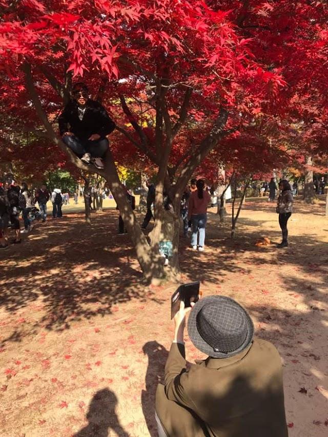 Vietnamese guests climb the tree, posing for photos in Korea