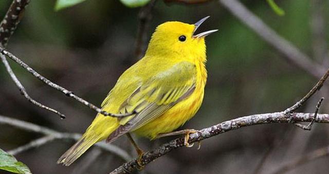 Mp3 Suara Kicau Burung Paling Lengkap