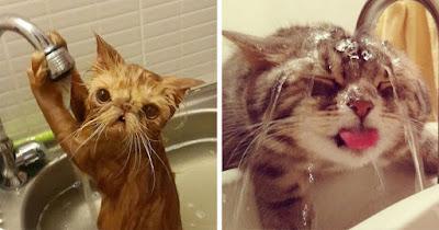 ¿Por qué mi gato odia el agua?