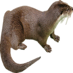 otter in spanish