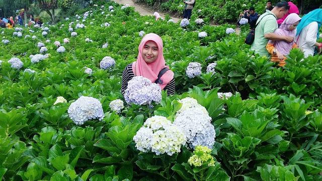 foto cantik taman bunga selecta
