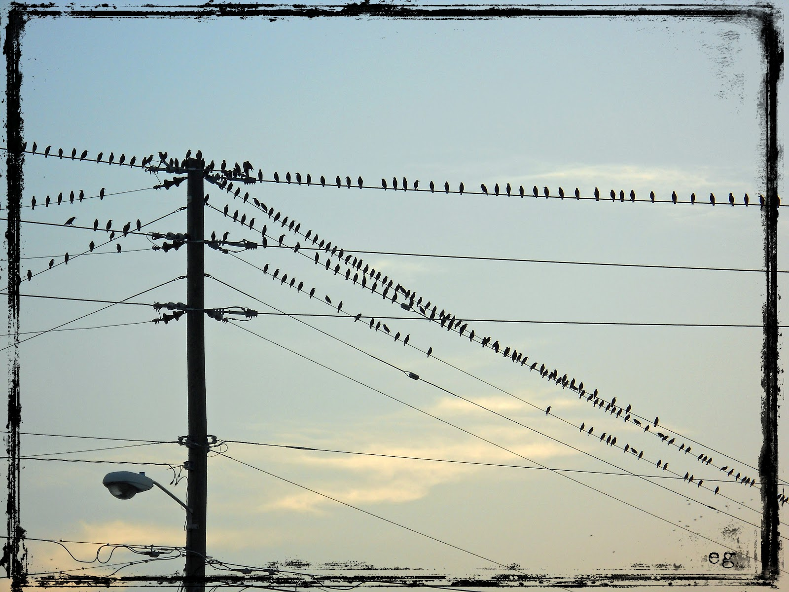 birds on a wire stopping at a light in a small town in tennessee at