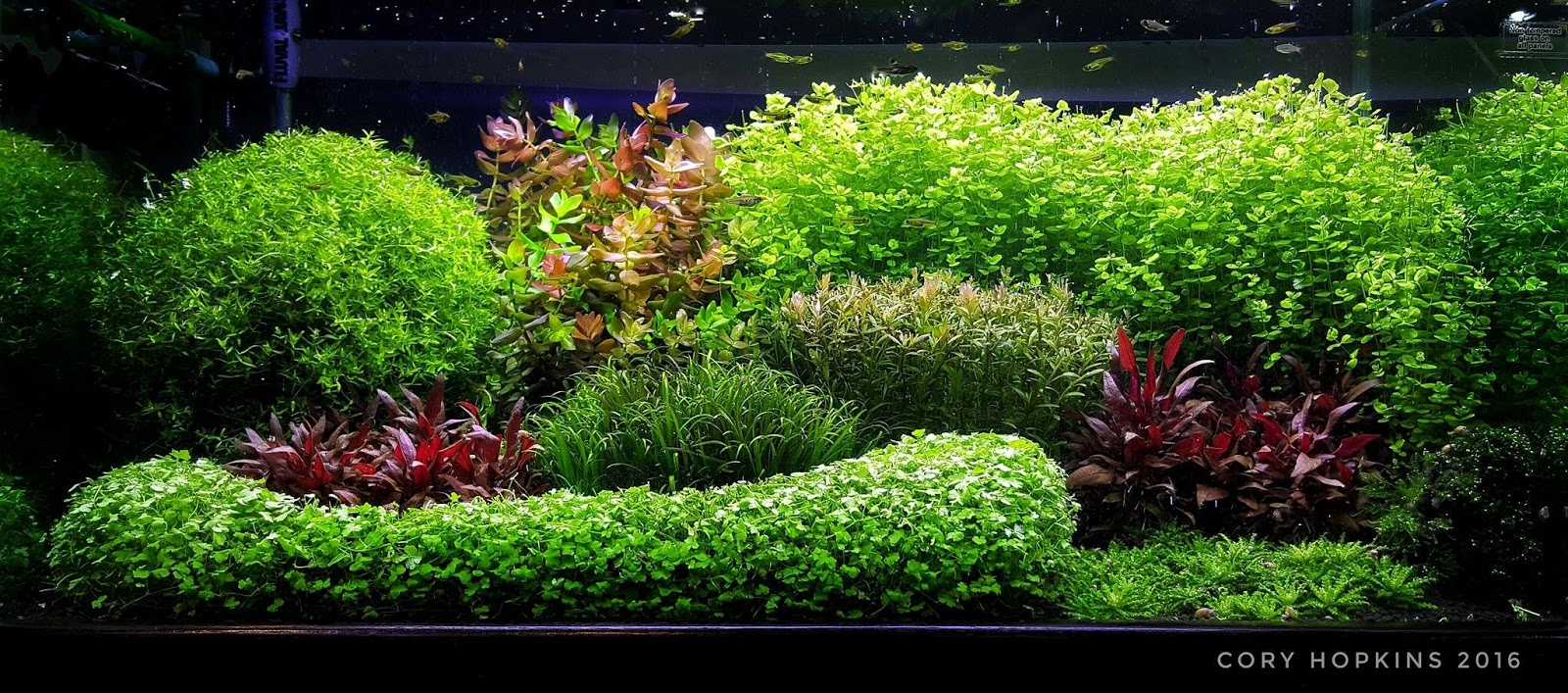 Canu0027t Dutch This   Another Great Example Of A Dutch Aquarium By American  Aquascaper Cory Hopkins