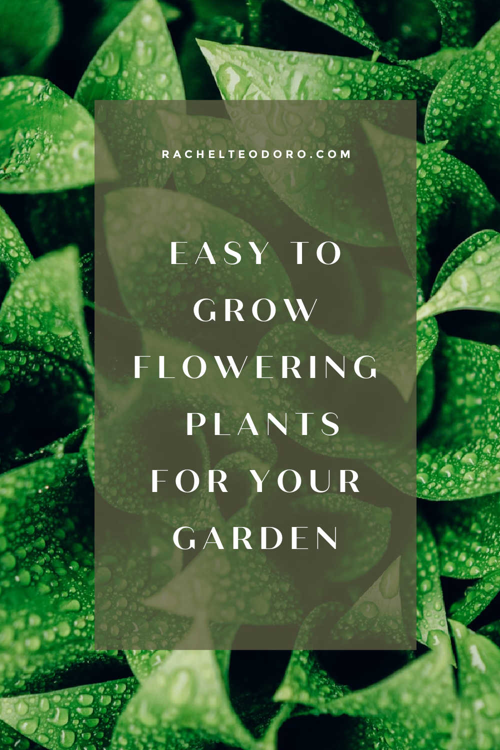 FLOWER PLANTS EASY TO GROW